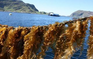 In Zanzibar, this project will undertake technical skills training in seaweed farming | À Zanzibar, ce projet entreprendra une formation technique en la culture des algues ©https://www.sintef.no/en/projects/norwegian-seaweed-technology-center/