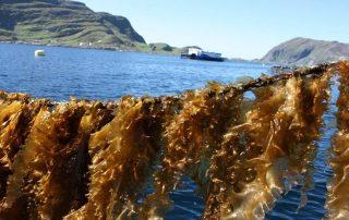 In Zanzibar, this project will undertake technical skills training in seaweed farming | À Zanzibar, ce projet entreprendra une formation technique en la culture des algues ©https://www.sintef.no/en/projects/norwegian-seaweed-technology-center/